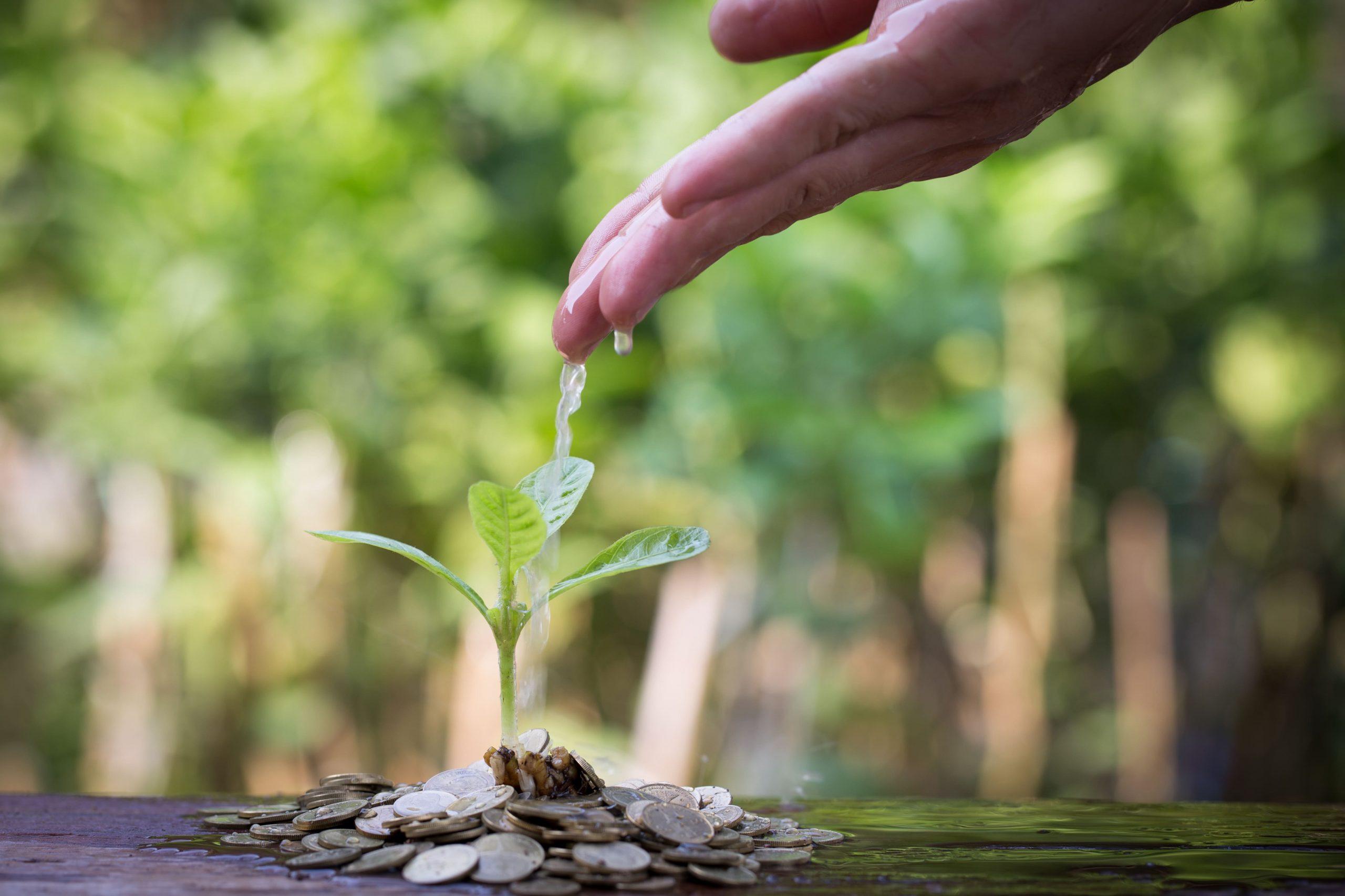 Main qui arrose une plante dont la terre est représenté par de l'argent