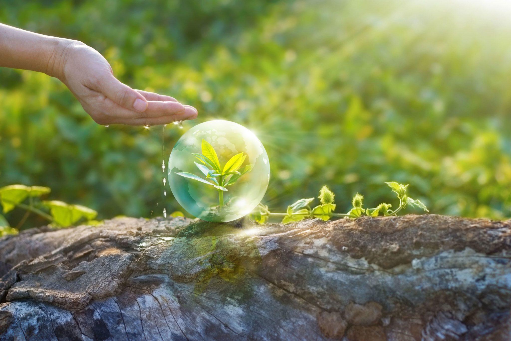Photo-montage d'une main qui arrose une plante